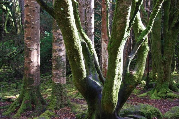 moss_forest_killarney_ireland_1