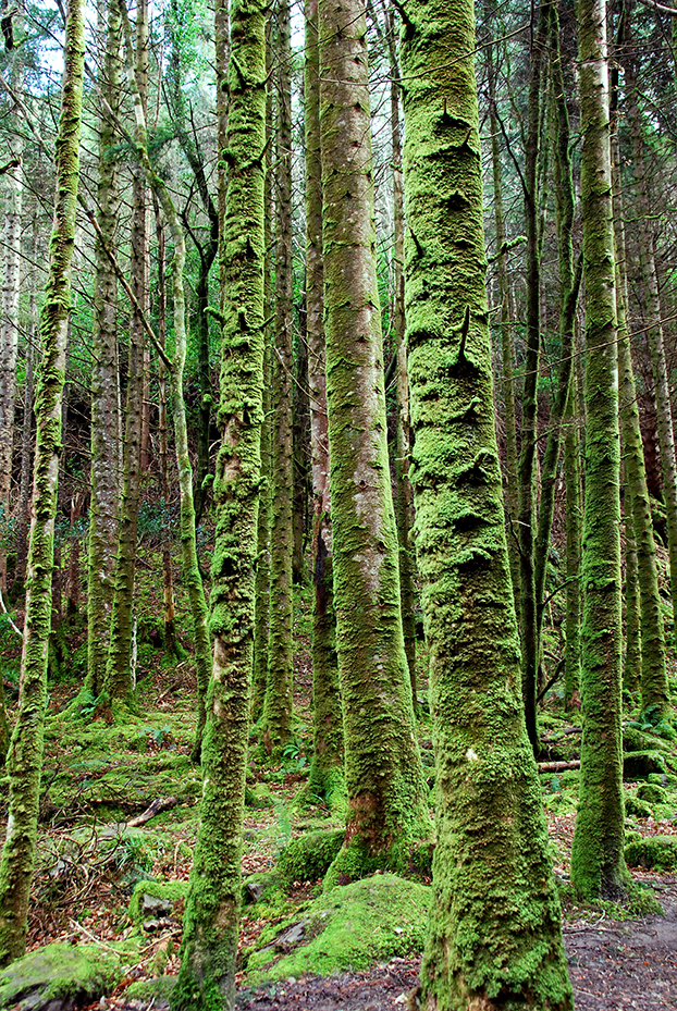 moss_forest_killarney_Ireland_2