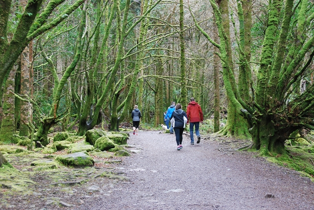moss_forest_killarney_ireland_3